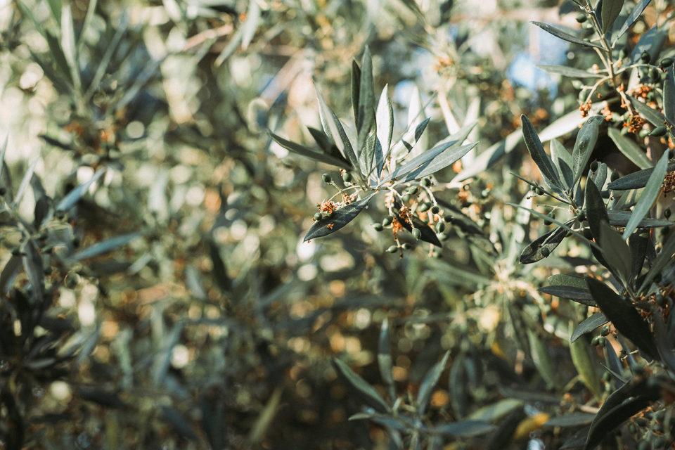 Afterwedding_Griechenland_liethisorganicfarm0016